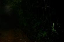 Bioluminescence_3_Ashwin