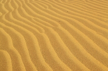 Dune Waves
