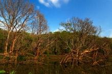 Swamp Elements