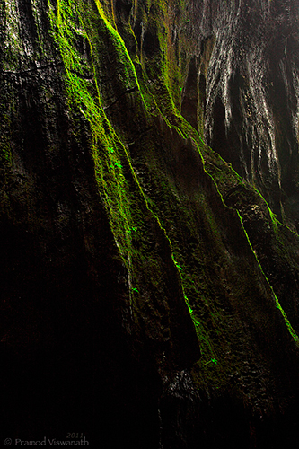 Beings From Jurassic, Bryophytes, moss, Intimate landscapes