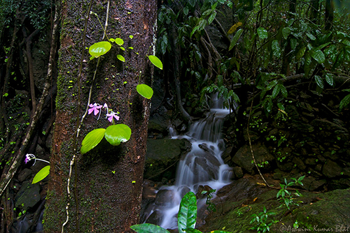 Forest flower and stream during monsoons